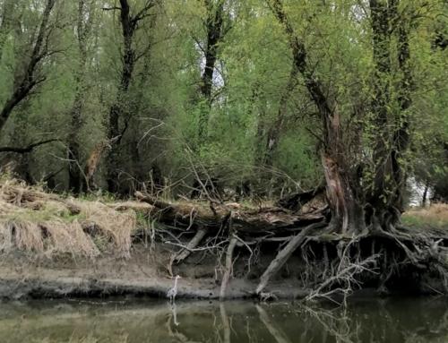 Izlet u park prirode Kopački rit