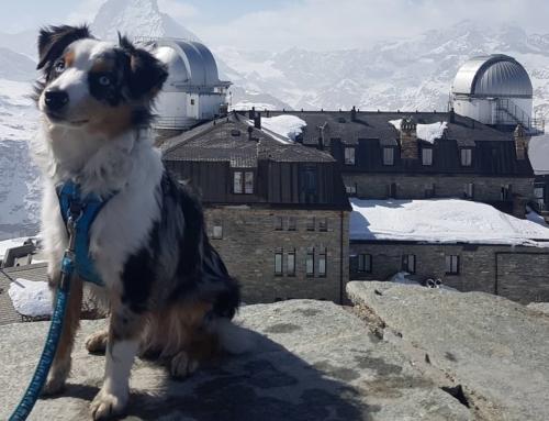 Kako dovesti kućnog ljubimca u Švicarsku?